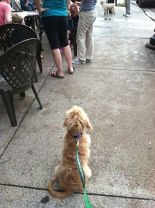 The writer's dog being uncharacteristically well-behaved outside Sebastian Joe's